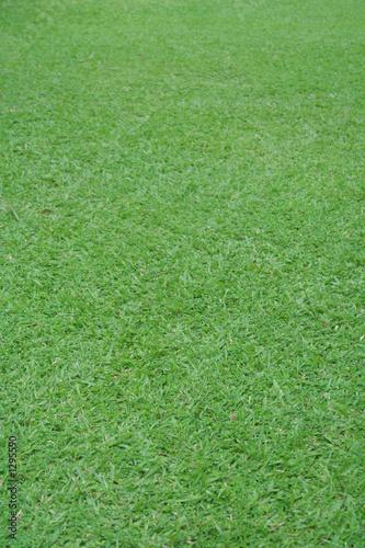 Poster Golf grass