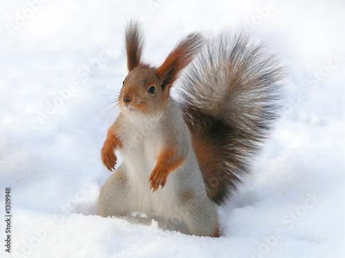 Foto op Canvas Eekhoorn surprised squirrel