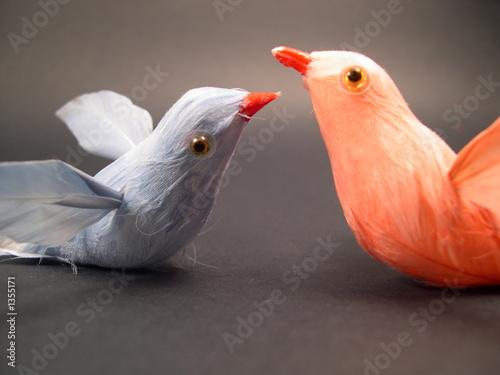 Photo oiseaux