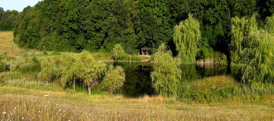 Fototapeta Do pokoju wood lake