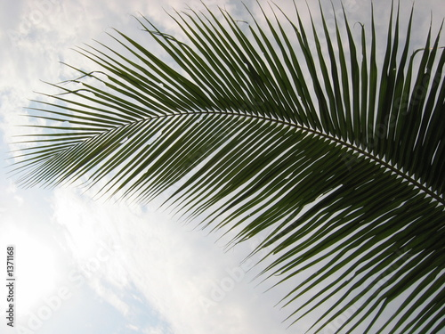 Foto op Plexiglas Historisch geb. closeup coconut palm tree leaf