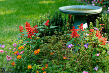 Bird Bath And Flower Garden In...
