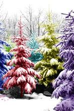 Christmas Trees Colorised