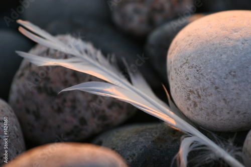 Fotografie, Obraz  feather on pebbles