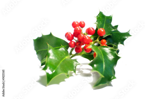 Feuille De Houx feuilles de houx à boules rouges - buy this stock photo and explore