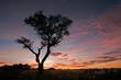 canvas print picture acacia tree silhouette