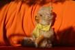 canvas print picture - teddybär im schatten