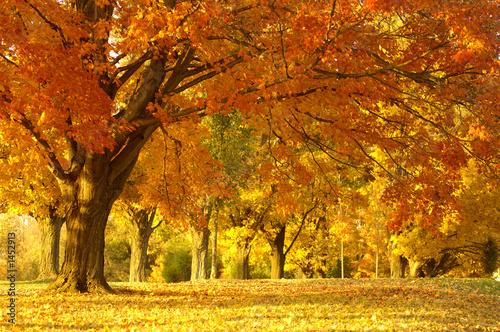 obraz lub plakat Jesienią sceny