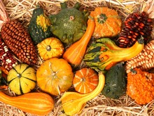 Mini Pumpkins