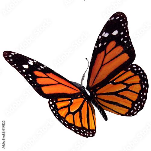 In de dag Vlinder bullterfly
