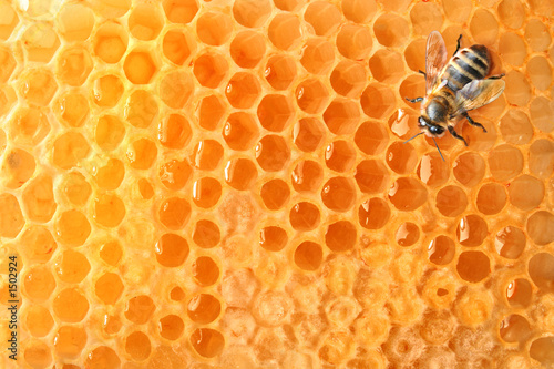 Spoed Foto op Canvas Bee bee on honeycomb