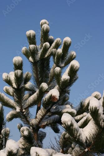 Papiers peints Cactus snowy tree