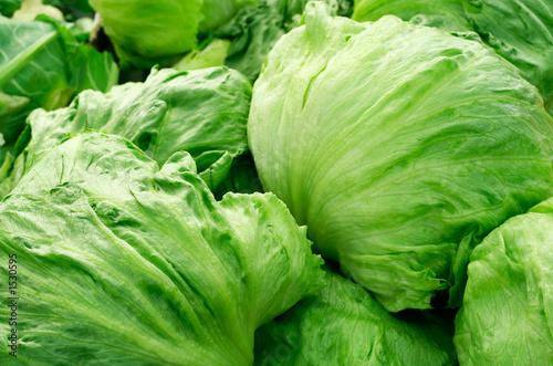 Obraz iceberg lettuce - fototapety do salonu