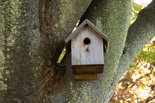Birdhouse In Mossy Tree