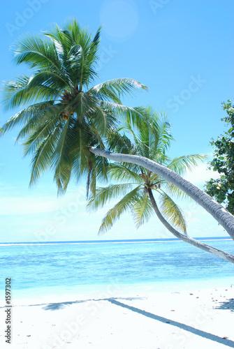 Foto Rollo Basic - paradise