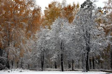 Panel Szklany Zima winter scene