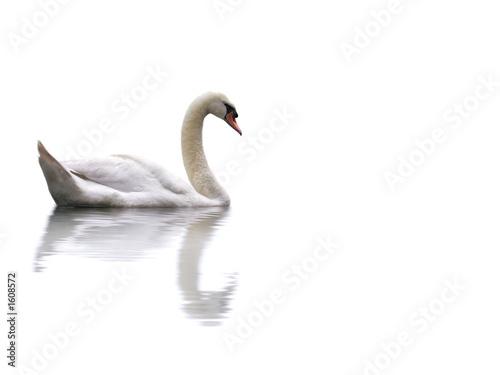 Deurstickers Zwaan swan