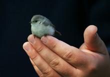 Bird On The Hand