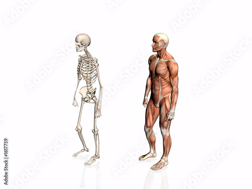 Anatomy Of The Man With Skeleton Buy This Stock Illustration And