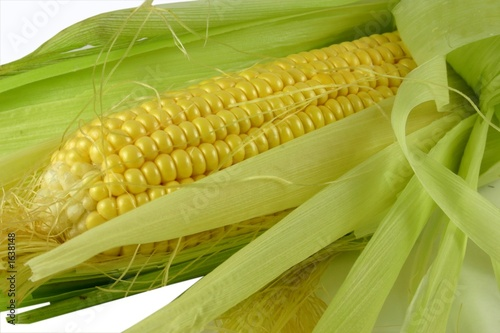Valokuva  corn on the cob