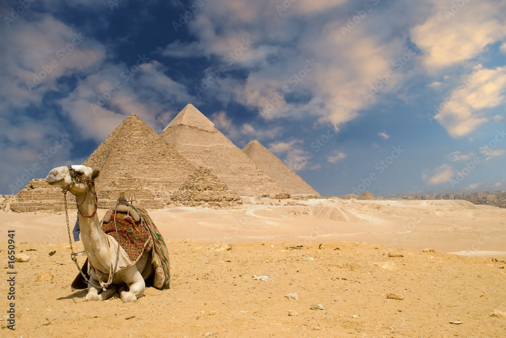 Leinwandbild Motiv - Windowseat : the pyramids camel