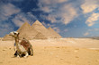 canvas print picture the pyramids camel