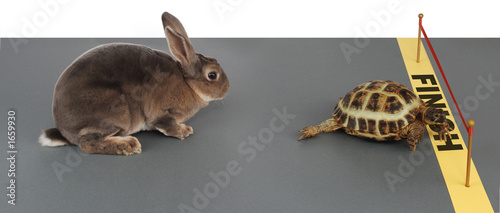 Stickers pour porte Tortue tortoise-hare