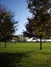 Dagenham Trees 4