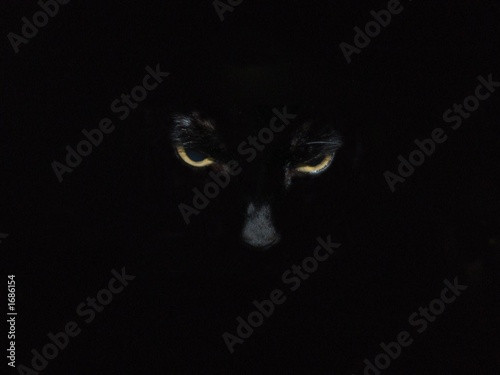 Photo Stands Panther amber eyes black cat
