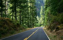 Forest Road 2