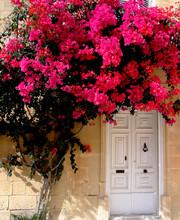 Tree & Door