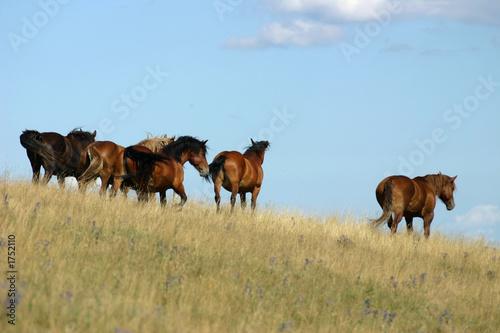 Fotografiet  horses