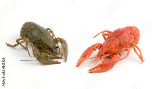 Poster Coquillage crayfish