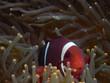 mi anemona