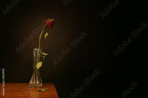 Valokuva  love lost