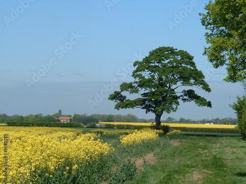 Papiers peints Jardin country scene