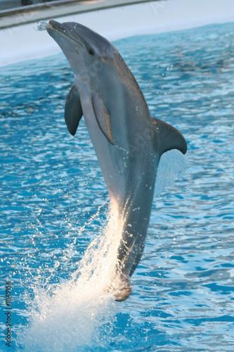 Fotografie, Obraz  dolphin