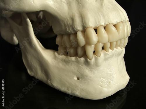 Valokuva  dental occlusion