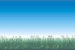 canvas print picture - sommertag - gras vor blauem himmel