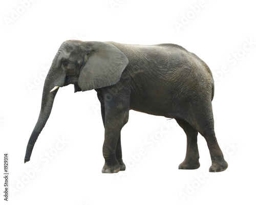 Fotobehang Olifant isolated lcd monitor