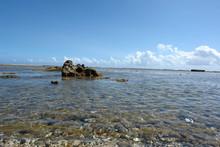 Maree Basse Et Corail Tropical