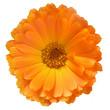 Leinwandbild Motiv everlasting, bloom