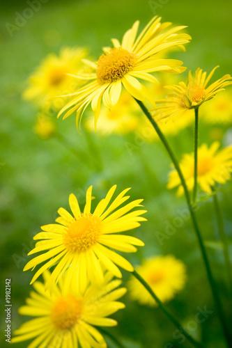 Doppelrollo mit Motiv - summer flowers
