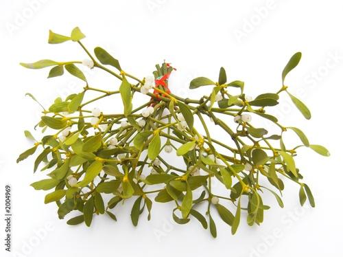 Obraz na plátně mistletoe
