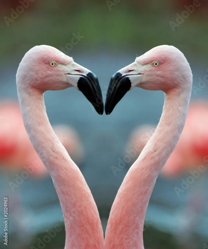 Garden Poster Flamingo flamingo heart