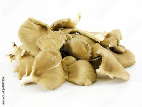 Obraz na plátně champignons pleurottes
