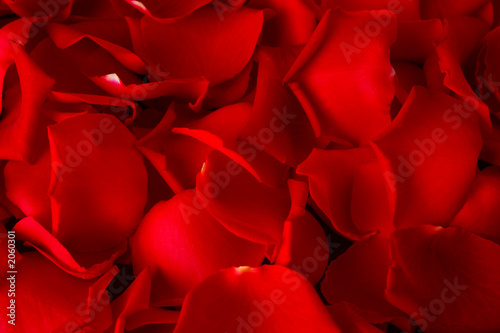 Foto-Duschvorhang - rosenblätter hintergrund (von Ramona Heim)