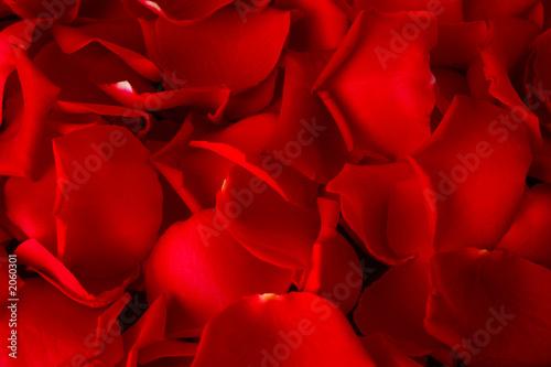 Foto-Duschvorhang - rosenblätter hintergrund