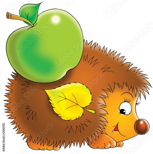 Foto-Plissee - hedgehog (von Alexey Bannykh)