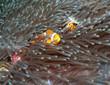 nemo fish 2